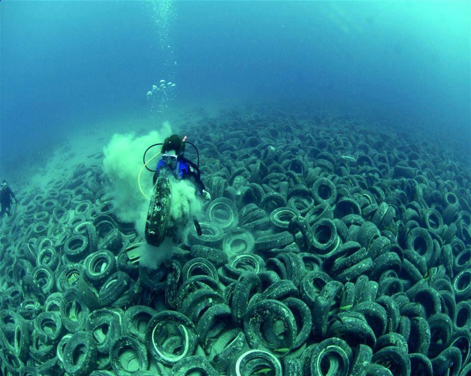 پروژه پاکسازی مرجانهای فلوریدا با شکست مواجه شد!!