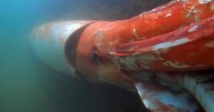 مشاهده ماهی مرکب غول آسا در ژاپن!!
