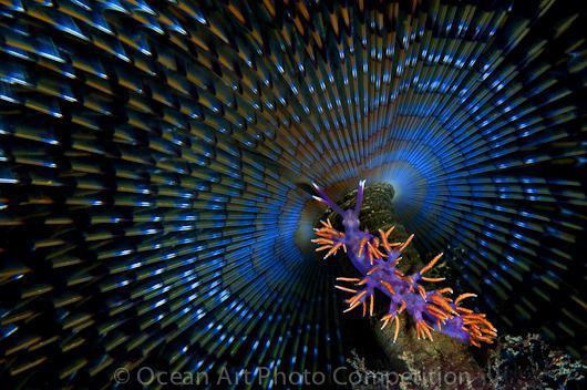 مسابقه عکاسی زیر آب (OCEAN ART)