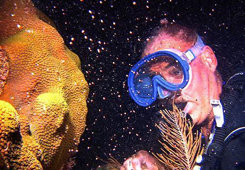 تخم ریزی سالانه مرجان ها در فلوریدا کیز