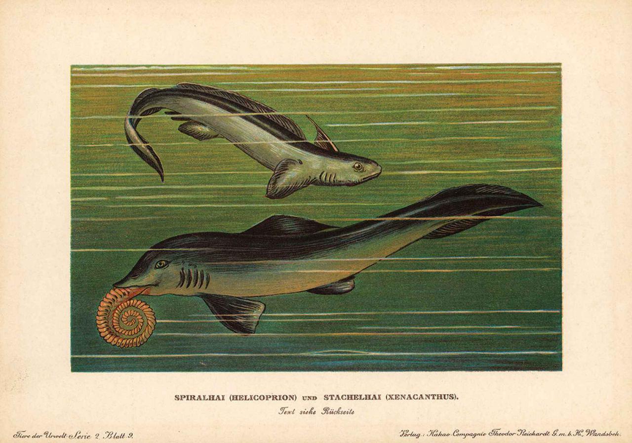 جمجمه یک نهنگ مطعلق به ماقبل تاریخ در ویرجینیا آمریکا کشف شد!